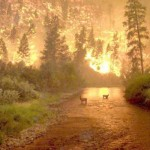 Elk jaar weer bosbranden
