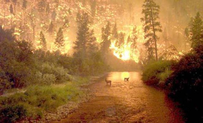 Elk jaar weer: bosbranden