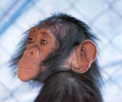 Testen op primaten: onvermijdelijk of onnodig?