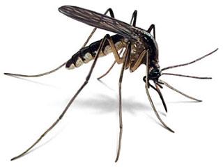 Help: Muggentijd!